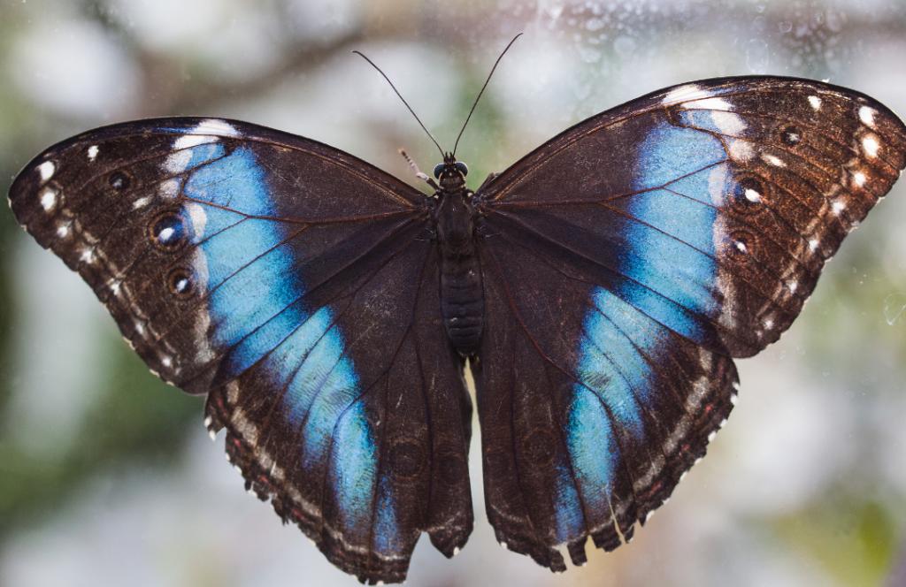 butterflyinspiration
