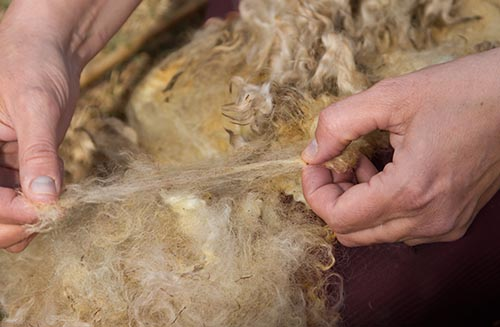 testing tensile strength of wool fleece fiber